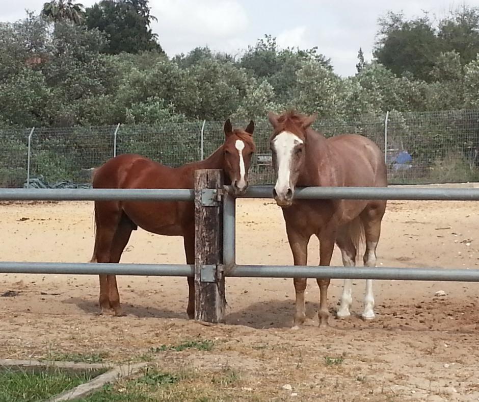 אסנת חן - סוסים