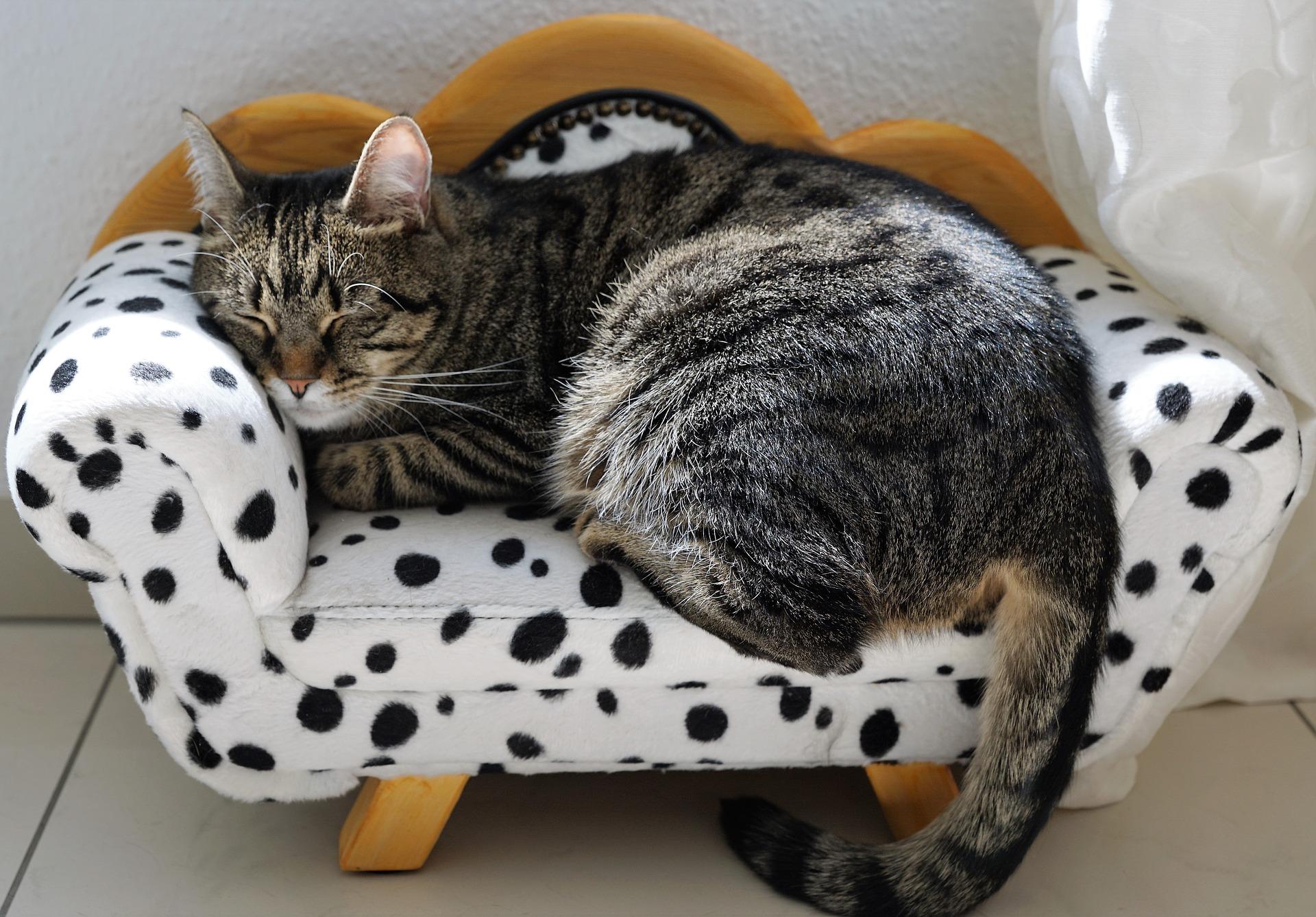 אסנת חן - חתול על ספה